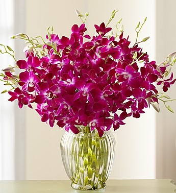 Exotic Orchids 15 30 Stems Distinctive Designs With Marlo